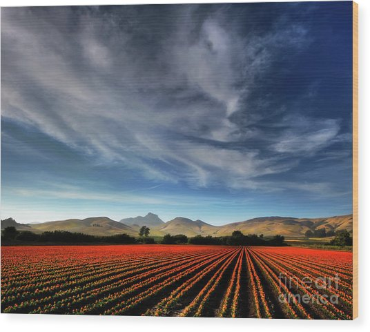 Field Of Color Wood Print
