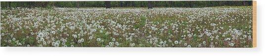 Field Of Dandelions Wood Print
