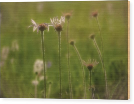 Field Of Flowers 2 Wood Print
