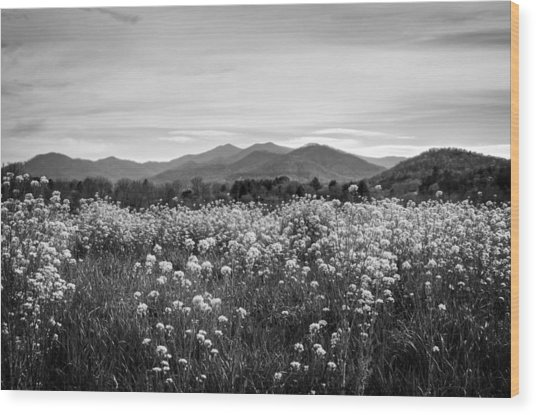 Field Of Flowers In Black And White Wood Print