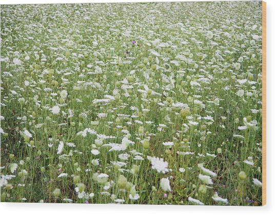 Field Of Queen Annes Lace Wood Print
