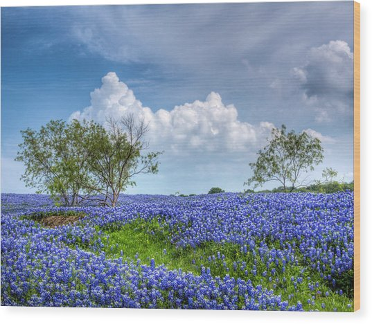 Field Of Texas Bluebonnets Wood Print