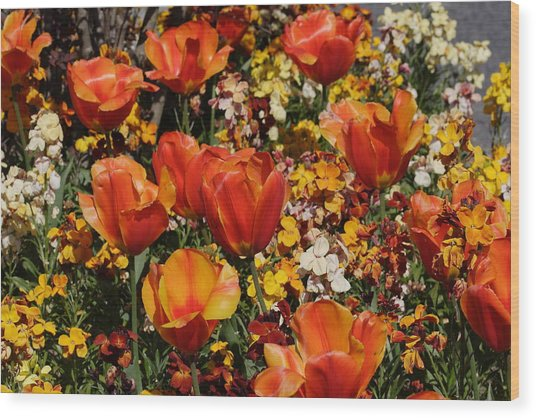 Field Of Tulips Wood Print by Pierre Leclerc Photography
