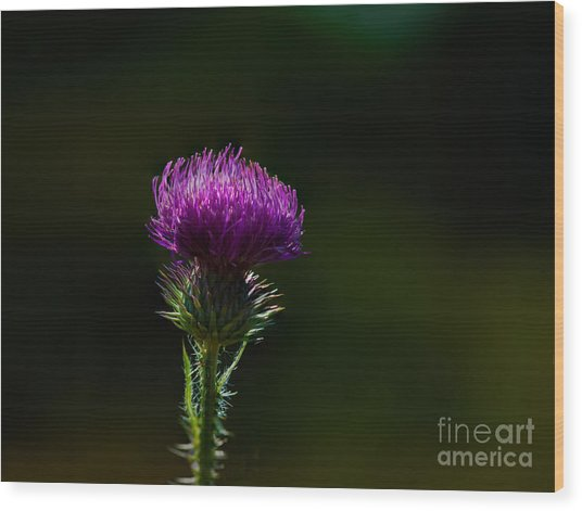 Field Thistle Wood Print