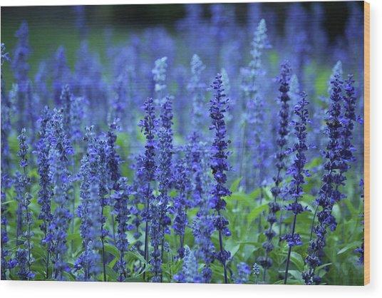 Fields Of Blue Wood Print