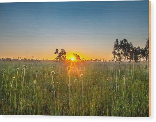 Fields Of Gold Wood Print