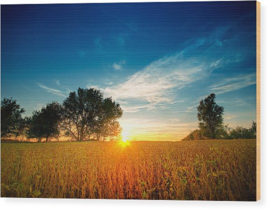 Fields Of Gold Wood Print by Ryan Heffron