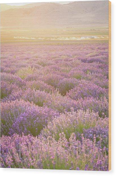 Fields Of Lavender Wood Print