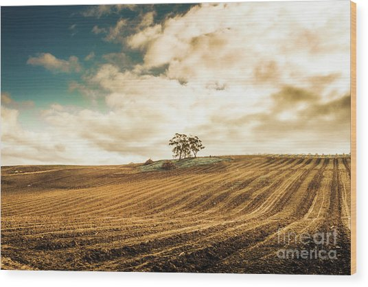 Fields Of Tasmanian Agriculture Wood Print