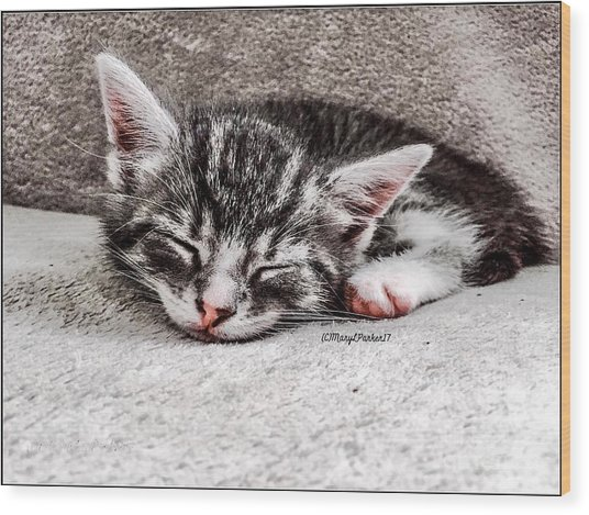 Finally Asleep  Copyright Mary Lee Parker 17  Wood Print