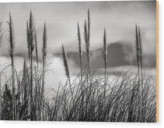Fine Art Black And White-188 Wood Print