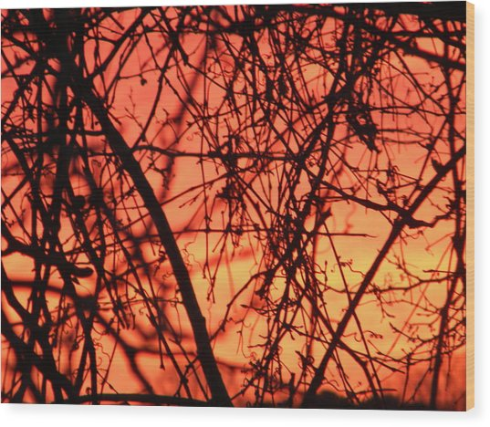 Fire Wood Print by Cassandra Donnelly