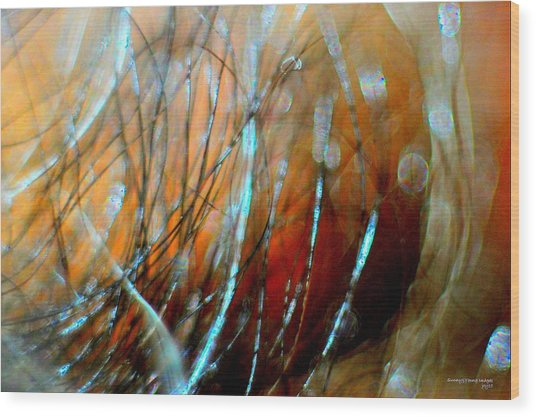 Fire In The Wind Wood Print by JCYoung MacroXscape