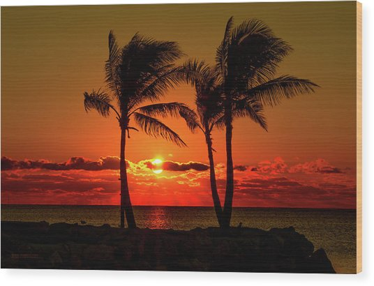 Fire Sunset Through Palms Wood Print