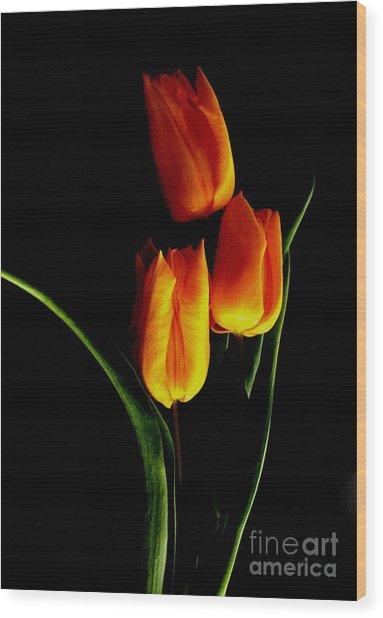 Fire Tulips Wood Print by Valia Bradshaw