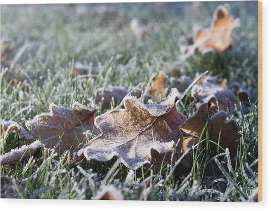 Wood Print featuring the photograph First Frost by Helga Novelli