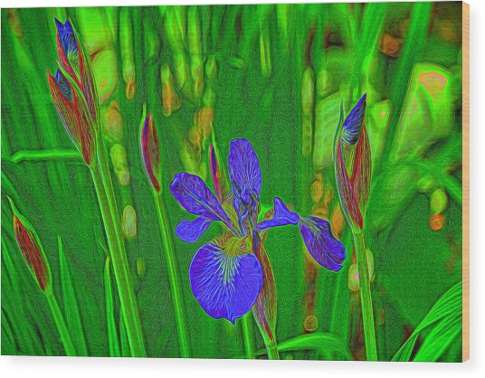 First Iris To Bloom Wood Print