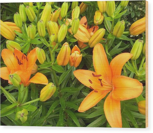 First Orange Lillies Wood Print by Ellen B Pate