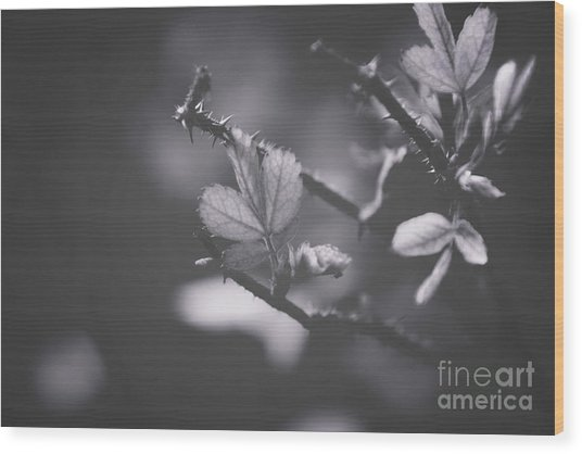 First Signs Of Spring -georgia Wood Print