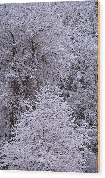 First Snow I Wood Print