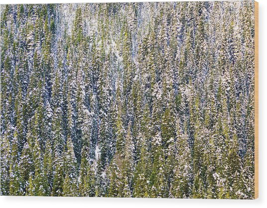 First Snow On Trees Wood Print