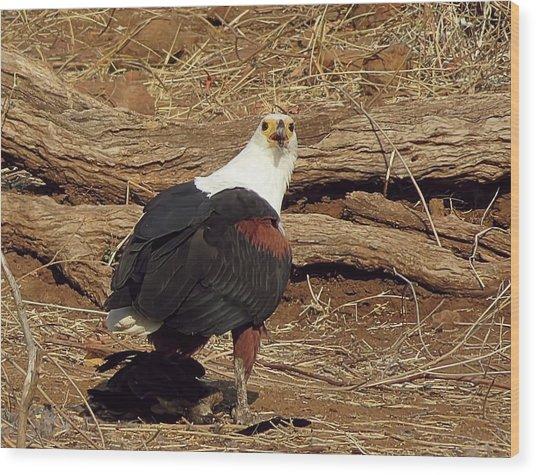 Fish Eagle Wood Print