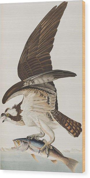 Fish Hawk Or Osprey Wood Print