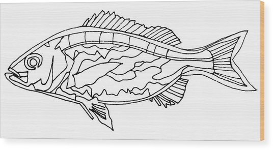 Fish Lines Wood Print by Baya Clare