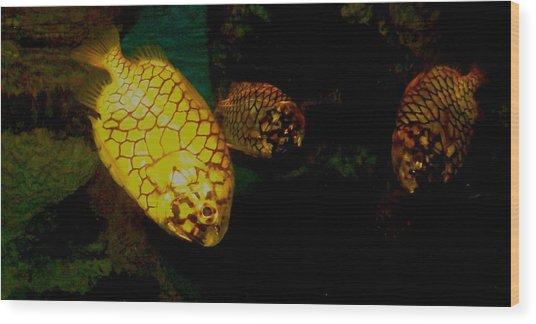 Fish Wood Print by Misty VanPool