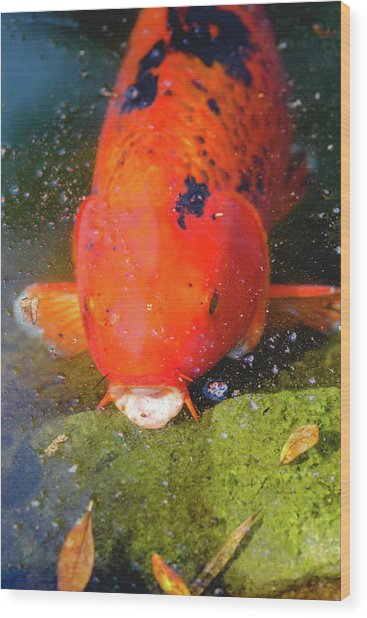 Wood Print featuring the photograph Fish Surprise by Raphael Lopez