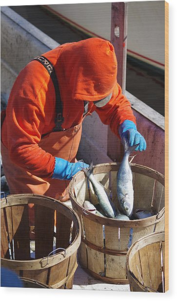 Wood Print featuring the photograph Fisherman Sorting His Catch by Willard Killough III