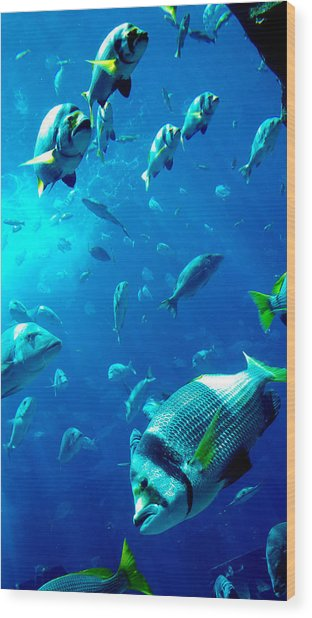 Fishes Wood Print by Leena Kewlani