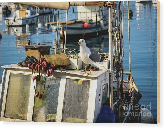 Fishing Boat Captain Seagull - Rovinj, Croatia Wood Print