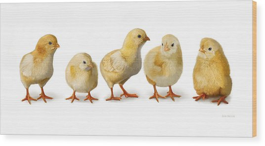 Wood Print featuring the digital art Five Chicks In A Row by Bob Nolin