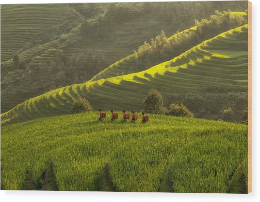 Five Ladies In Rice Fields Wood Print