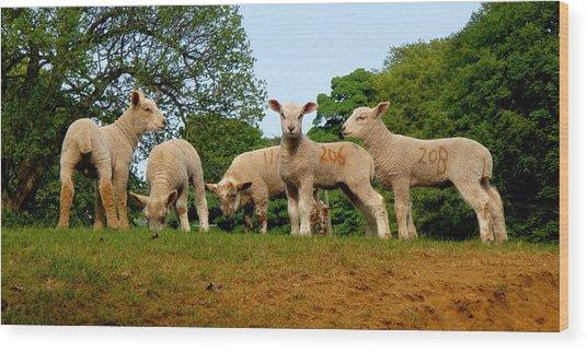 Five Little Lambs Wood Print