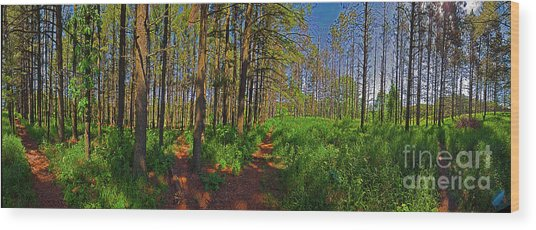 Paths, Pines 360 Wood Print