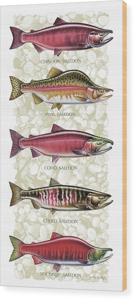 Five Salmon Species  Wood Print