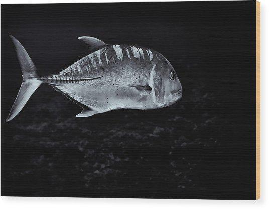Fla-150811-nd800e-26063-bw-selenium Wood Print