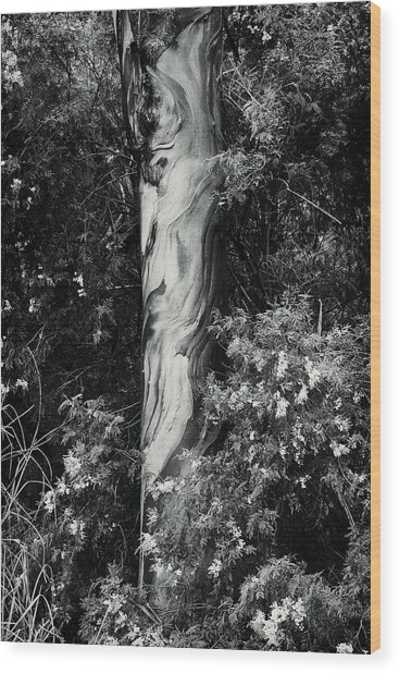 Fla-150523-nd800e-24853-bw-green Wood Print