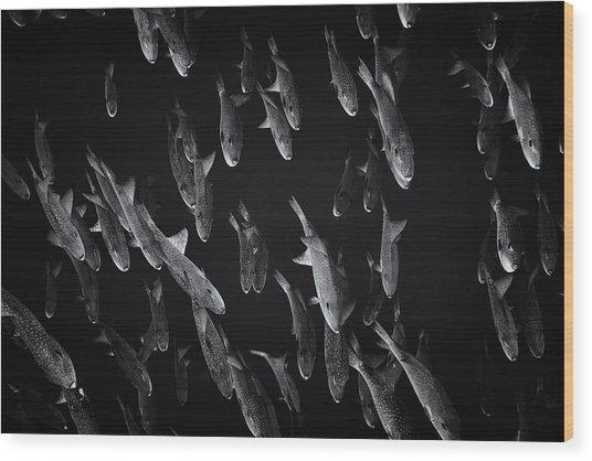 Fla-150811-nd800e-26105-bw-selenium Wood Print