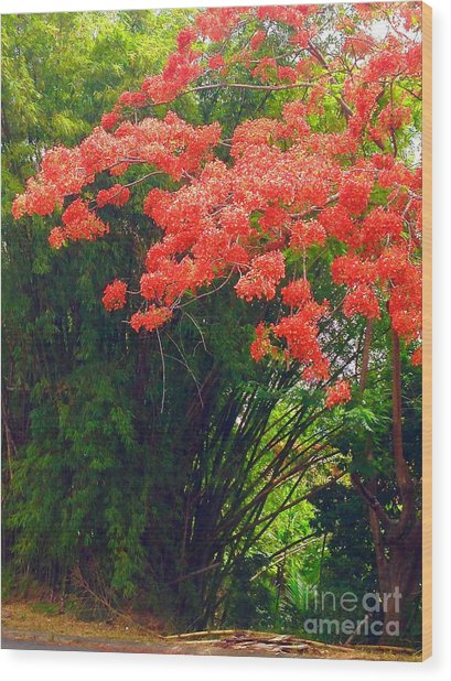 Flamboyant With Bamboo Wood Print