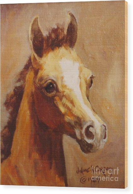 Flame Princess    Arabian Filly Portrait Wood Print by JoAnne Corpany
