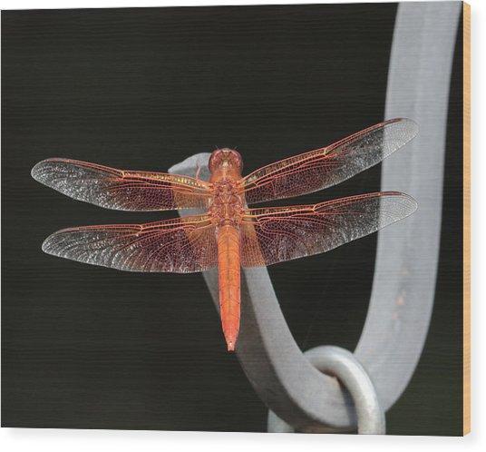 Flame Skimmer Wood Print