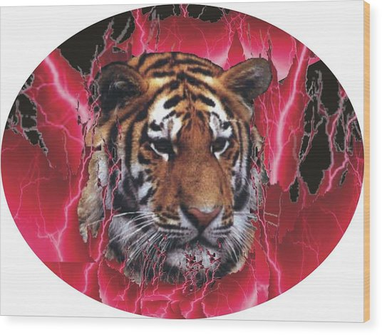 Flame Tiger Wood Print by Kathy Frankford