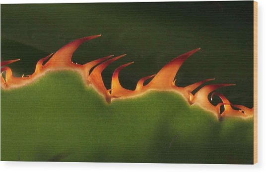 Flaming Aloe Wood Print by Matt Cormons