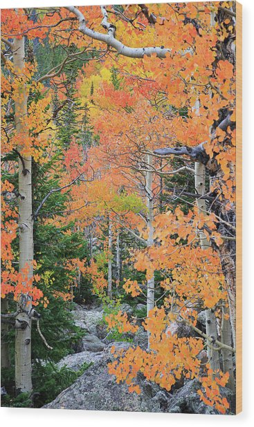 Flaming Forest Wood Print