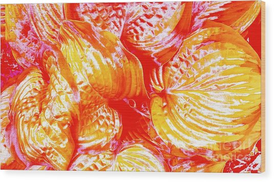 Flaming Hosta Wood Print