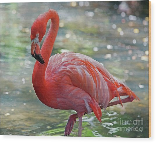 Flamingo 2  Wood Print