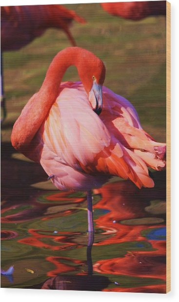 Flamingo 2 Wood Print by Russell  Barton